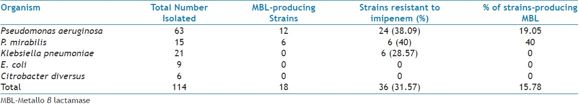 Table 3: Distribution of Mbl-Producing Organisms