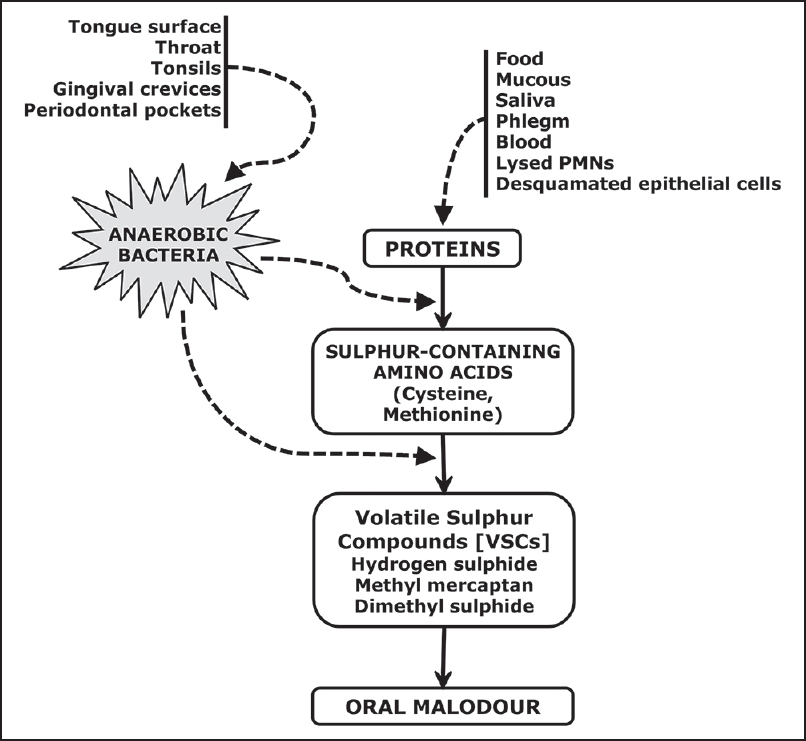 Figure 2: Flow chart depicting etiopathogenesis of oral malodor