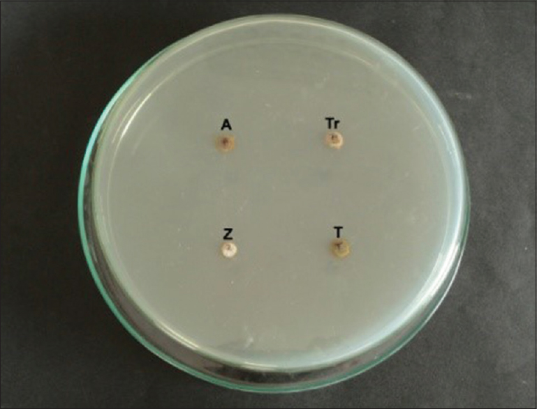 Figure 1: Test materials placed in Agar wells