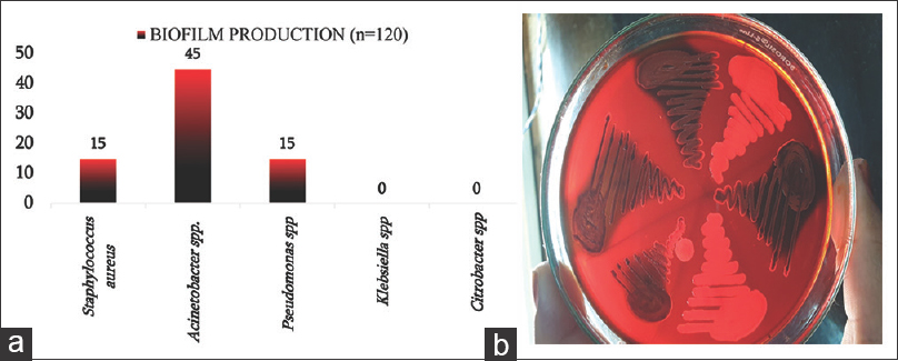 Figure 8: (a): Biofilm production by isolates. (b) Biofilm production on Congo Red Agar